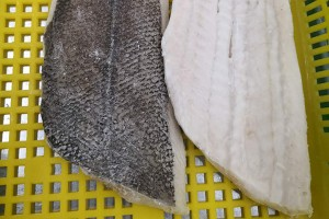 Arrow flounder fillets